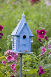 Blue Birdhouse Near Hollyhocks Marion  Illinois  Usa