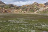 Meadow Landscape in Landmannalaugar  Iceland
