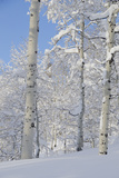 Fresh Snow  Big Cottonwood Canyon  Uinta Wasatch Cache Nf  Utah