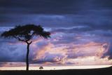 Kenya  Maasai Mara Sunset after Storm on Plains