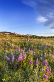 Wildflowers Along the Rocky Mountains  Blackleaf Wma  Montana  Usa