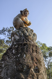 Cambodia  Angkor Wat Long Tailed Macaque on Statue