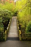 Bridge  Crystal Springs Rhododendron Garden  Portland  Oregon  Usa