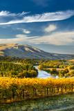 USA, Washington. Harvest Season for Red Mountain Vineyards Papier Photo par Richard Duval