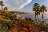 Overlooking Blooming Aloe in Laguna Beach  Ca