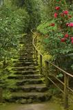 Camellias Steps  Portland Japanese Garden  Portland  Oregon  Usa