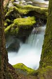 Panther Creek  Gifford-Pinchot National Forest  Washington  Usa