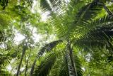 Inside Rainforest  Selva Verde  Costa Rica