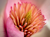Extreme Close-Up of Flower