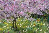 France  Giverny Springtime in Claude Monet's Garden