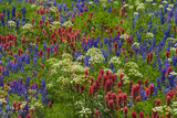Wildflowers  Mount Timpanogos  Uintah-Wasatch-Cache Nf  Utah