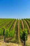 USA  Washington  Walla Walla Vineyard in Walla Walla Wine Country