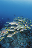 Group of Fish Swimming in Sea