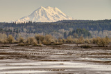 Washington Mt Rainier in the Distance at the Nisqually