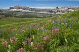 Alaska Basin Wildflower Meadow  Caribou -Targhee Nf  WYoming