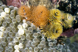 Curacao  Netherlands Antilles Colorful Christmas Tree Worms