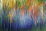 Canada  Shampers Bluff Abstract Blur of Garden Colors