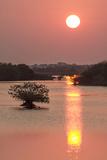 Sunrise  Mangroves and Water  Merritt Island Nwr  Florida