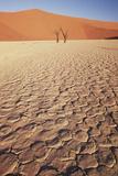 Namibia  Sossusvlei Region  Dry Sand Dunes at Desert