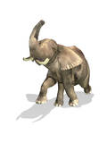 Elephant on White Background with Drop Shadow