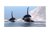 Two Orca Whales Pass Near an Iceberg in the North Arctic Ocean