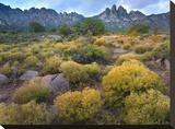 Organ Mountains  Chihuahuan Desert  New Mexico