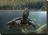 Turtle breathing at surface  Jurong Bird Park  Singapore