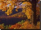 Autumn deciduous forest  Shenandoah National Park  Virginia