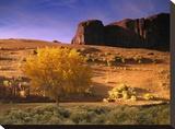 Cottonwood tree and Coyote bush with sand dunes  Monument Valley  Arizona