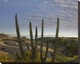 Organ Pipe Cactus overlooking Chelino Bay  Baja California  Mexico