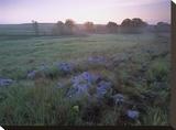 Misty morning over prairie  Tallgrass Prairie National Preserve  Kansas