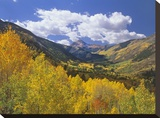 Haystack Mountain with aspen forest  Maroon Bells-Snowmass Wilderness  Colorado