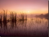 Reeds reflected in Sweet Bay Pond at sunrise  Everglades National Park  Florida