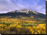 East Beckwith Mountain and trees in fall color  Gunnison National Forest  Colorado