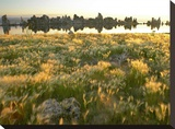 Squirreltail Barley and Tufa Towers silhouetted at dawn  Mono Lake  California