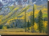 Aspen grove in fall colors  Maroon Bells  Snowmass Wilderness  Colorado