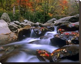 Little Pigeon River with Colorful Maple leaves  Great Smoky Mountains National Park  Tennessee