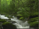 Roaring Fork River flowing through the Great Smoky Mountains National Park  Tennessee