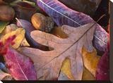 Acorns  Oak  Cherry and Sumac  fall  Petit Jean State Park  Arkansas