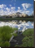 Mammoth Peak reflected in seasonal pool  Yosemite NP  California