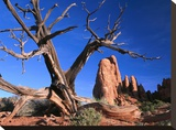 Snag at Fiery Furnace labyrinth  Arches National Park  Utah