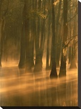 Bald Cypress swamp  Calcasieu River backwater  Lake Charles  Louisiana