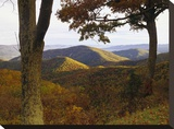 Autumn forest at Brown Mountain  Shenandoah National Park  Virginia
