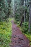 Massachusetts Appalachian Trail Photo Print Poster