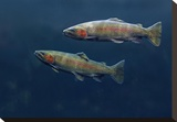 Rainbow Trout pair swimming underwater