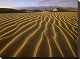 Sand dunes  Death Valley National Park  California