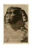 Close-Up View of Sphinx  Giza  Egypt