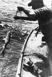 Swordfishing