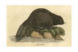 Beaver (1814)