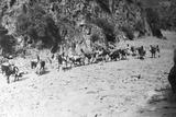 A Mule Caravan